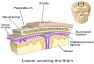 Scalp Anatomy image